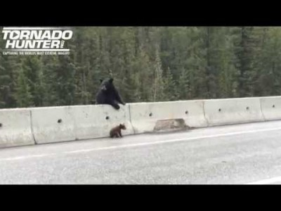 Mother Bear Rescues Baby Bear