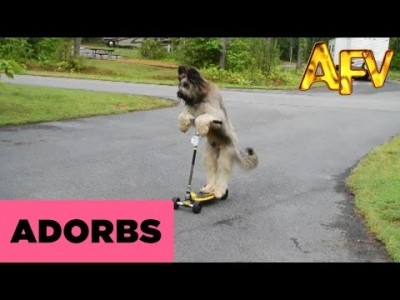 Talented Dog Rides a Scooter