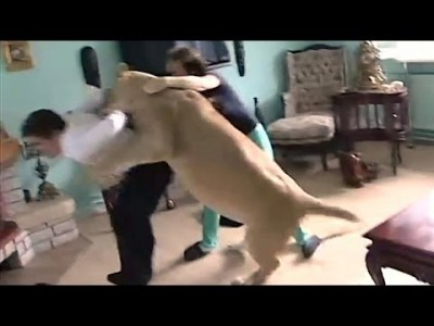 Lion Attack: Lioness Attacks Man in Home