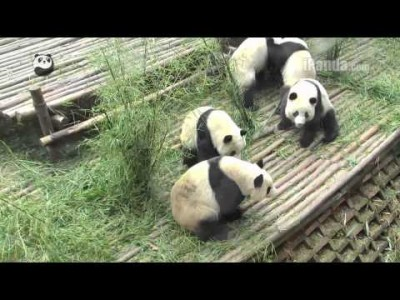 Pandas getting into an Argument