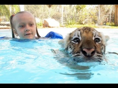 Swimming with Tiger Cubs