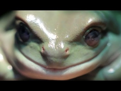 True Facts about the Frog