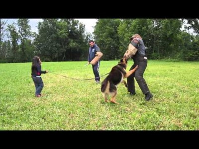 5 Year Old getting Protected by her German Shepherd from 2 Bad Guys