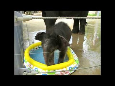 Baby Elephant in the Baby Pool