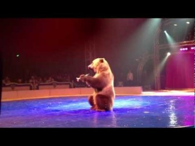 Tima the Bear at the Circus Festival