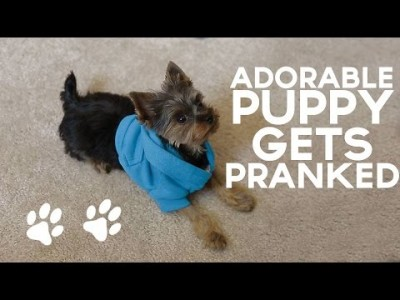 Adorable Puppy gets Pranked
