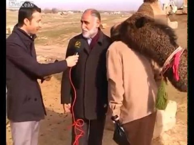 Camel decides this Interview is Over