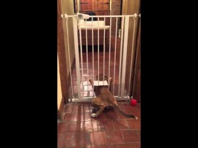 Our dog escaping through Cat Flap