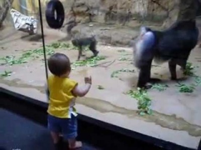 Baboon Scares Toddler