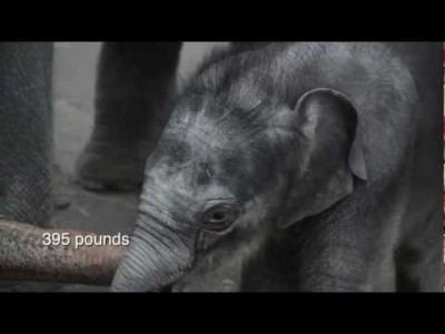 Lily the Baby Elephant at Three Months