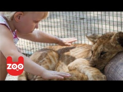Lion Cub lives with a Baby Girl