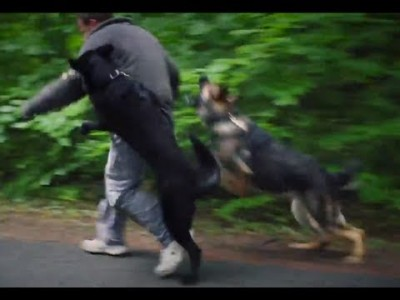 Personal Protection Dogs Working as One