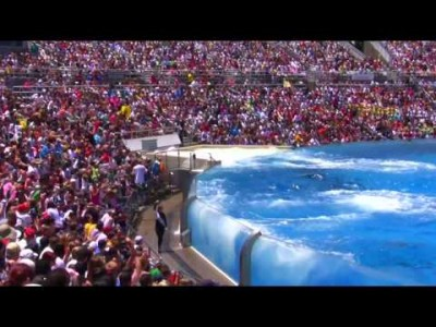 Killer Whale Show at Seaworld