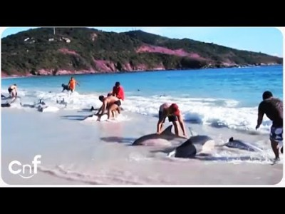 Heroic Crowd Saves Beached Dolphins from Death