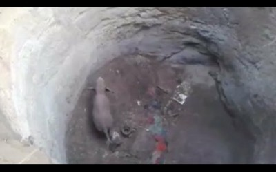 Baby Elephant rescued from Well in India