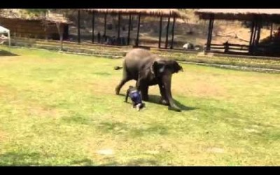 Elephant comes to the Rescue