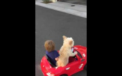 Dog drives Little Boy in Car